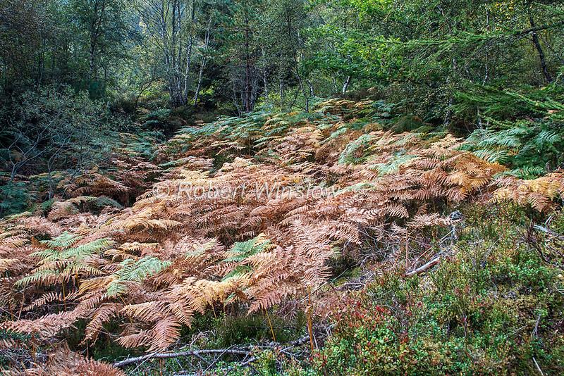 Ferns, Scottish Highlands, Scotland, United Kingdom, Europe