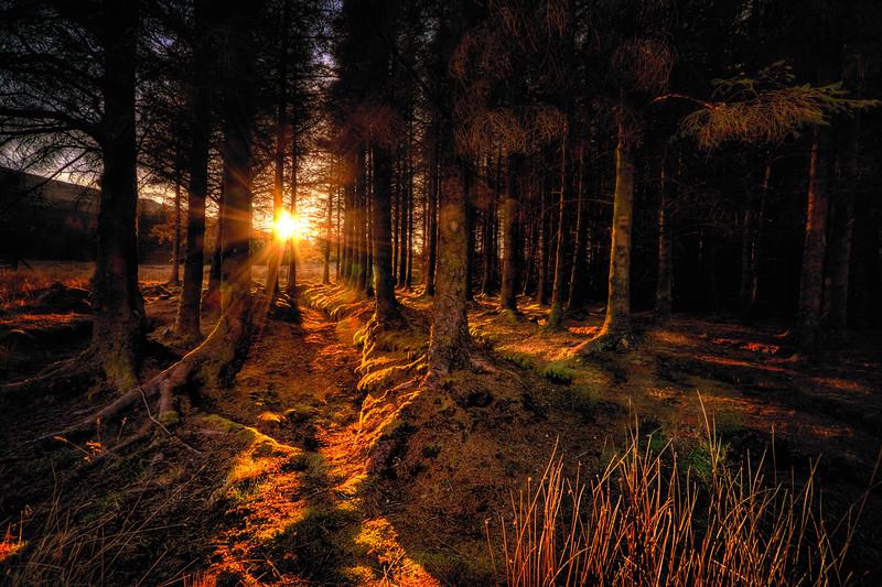 Glenbrittle Forest