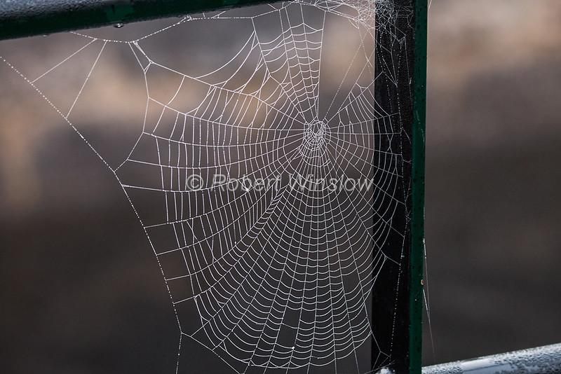 Spider Webs on a boat, Morning, Mist, Caledonian Canal; Great Glen Way; Scottish Highlands, Scotland; United Kingdom, Europe