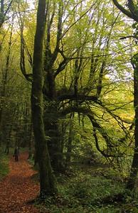 IMG_2522magic trees