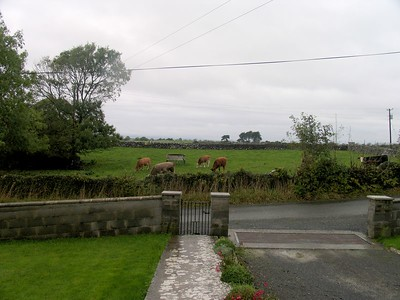 IMG_2438Good Morning Cows