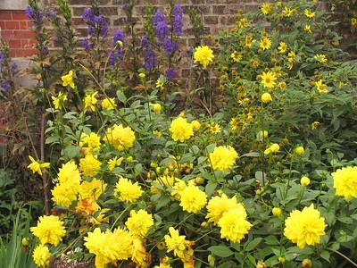 IMG_2177hampton court flower border