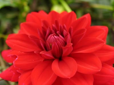 IMG_2174hampton court red flower macro2