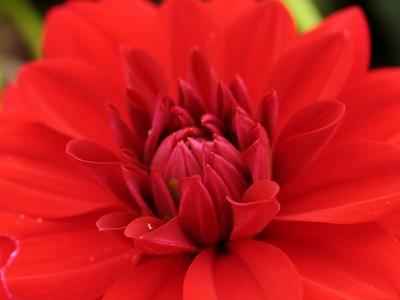 IMG_2173hampton court garden flower macro
