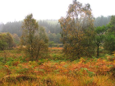 IMG_1689Trossachs autumn