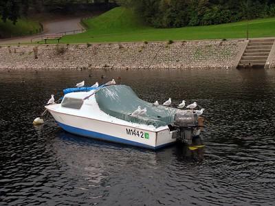 IMG_1618 gulls on boat
