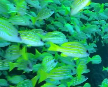 Fish Head dive, Maldives 2006