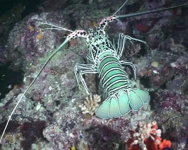Maldives 2005 - Night dives