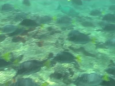 Galapagos - various small fish