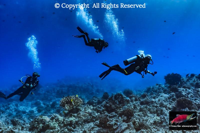 Scuba divers from Big island Divers