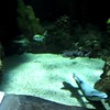 "Sea Life Aquarium Minnesota Visit Part 2<br /> <a href=""https://youtu.be/ch8PsF7CXKk"">https://youtu.be/ch8PsF7CXKk</a>"