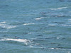 Kelp or seals?
