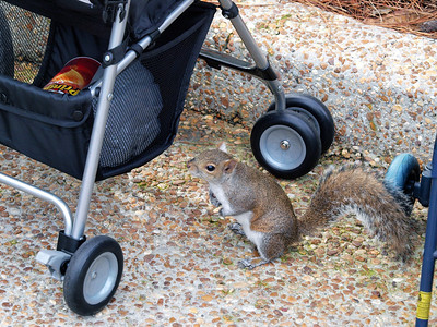 Sea World squirrel thief