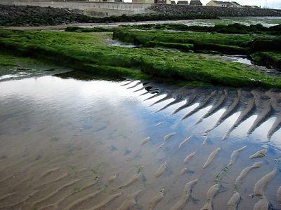 Tidal Pool at Seaton Beach
