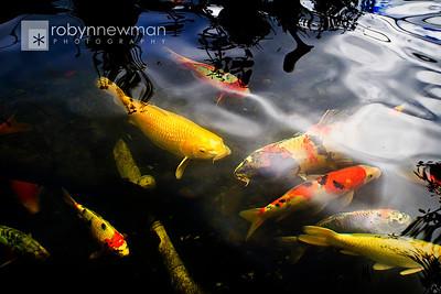 Fish Pond in Friday Harbor, San Juan Island