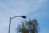 A funny woodpecker who kept pecking the top of this lamppost.  It was confused.
