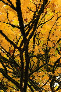 Seattle-Fall-20121028-19-2