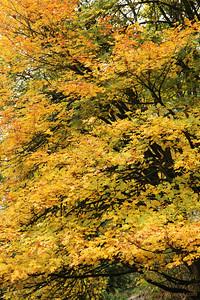 Seattle-Fall-20121028-15-2
