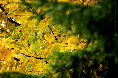 Seattle-Fall-20121031-04-2