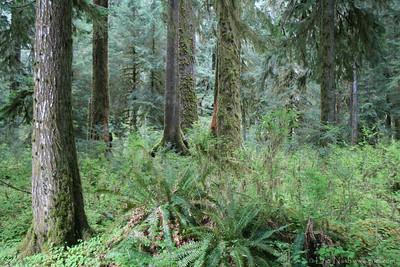 HohRainForest-20120506-033-37