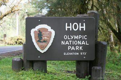 HohRainForest-20120506-005-46