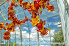 Dale Chihuly Glass House