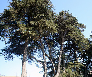 Trees near Tomales Bay, 14 Aug 2009