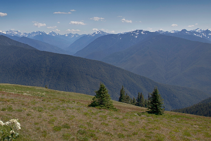 Olympic Mountains from Hurricane Ridge, Olympic National Park