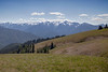 Mount Olympus,  from Hurricane Ridge, Olympic National Park