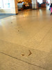 Fish in the floor.  These bronze reliefs wound their way through the entire airport.