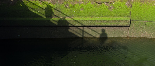 at the Ballard Locks
