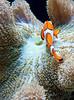 Seattle Aquarium Tropical Fish
