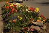 098 - Flower Bed - DSC_5764