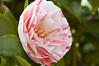 076 - Flower - DSC_6527