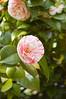 072 - Flower - DSC_6523