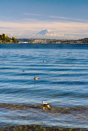 Shore birds in Seward Park, Seattle
