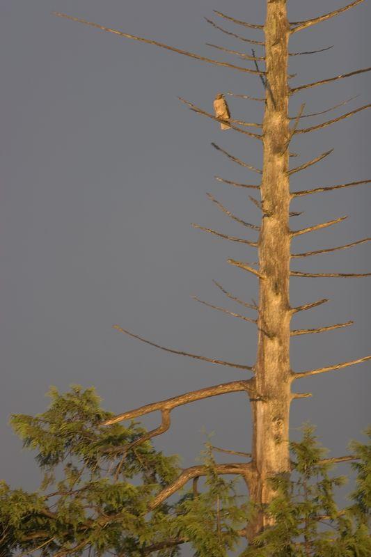 Raptor Tree