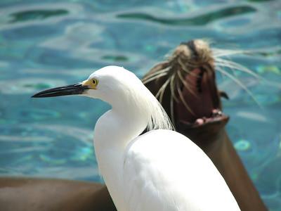 Bird & Seal