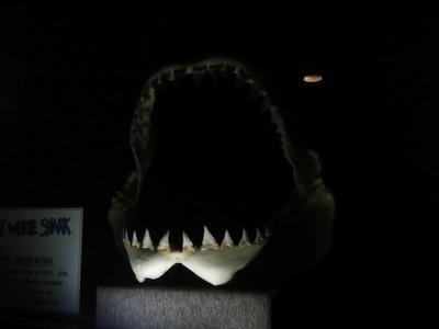 White Shark's Jaw
