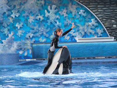 Shamu the Orca whale