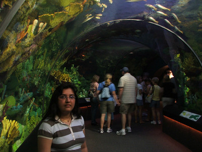 Inside the aquarium