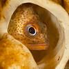 Rockfish - Dive 3 of 7 - Captain's Light