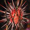 Urchin - Dive 4 of 7 - Nemo's Leap, Flood