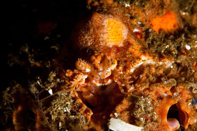 Crab - Dive 6 of 7 - Jaggy Crack