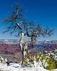 Tree with a view, South Rim Grand Canyon
