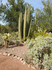 As you'd expect, it has an amazing array of cactus.