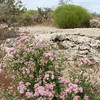 On trail to the top of Montezuma Well