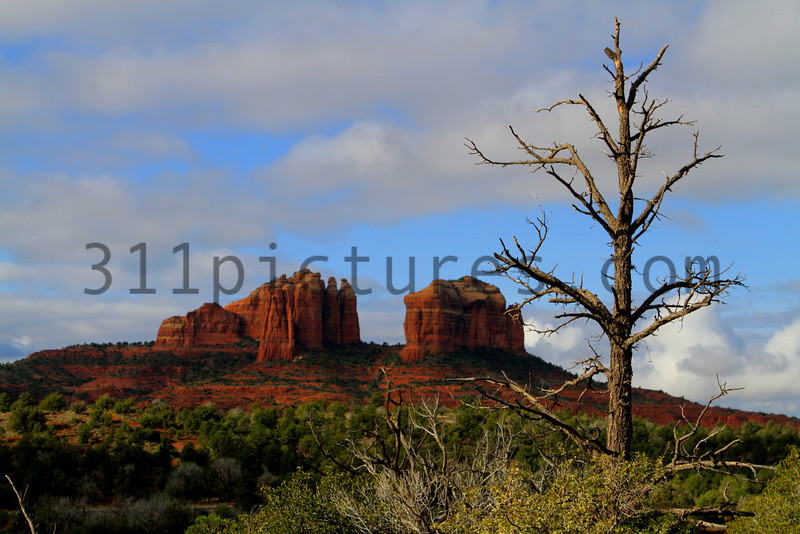 Desert Trees and Cathedral Rock