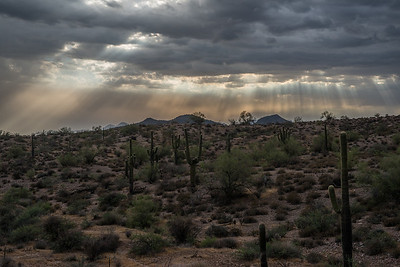 Tonto National Forest in a sand storm.
