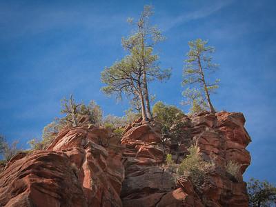 Peak-top trees